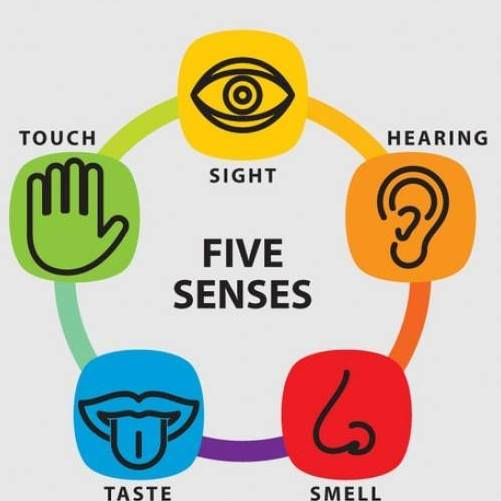 Valentin Five senses reviews
